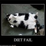 Jeff's DietBet